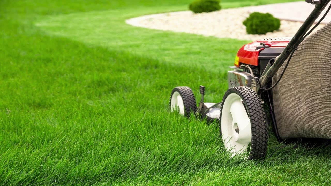How Often to Mow Lawn